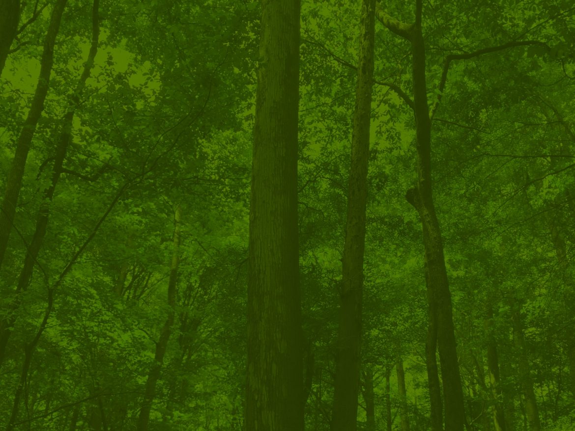 Trees_IMG_376grn_Services-scaled.jpg